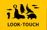 LOOK・TOUCH
